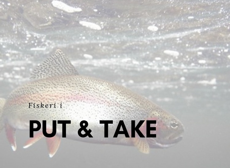 Tips til Put and Take Fiskeri